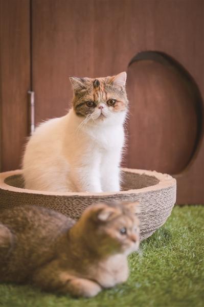 想通过可爱的猫咪