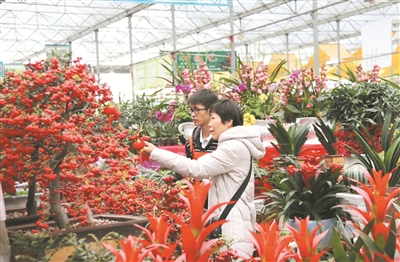 位于拉萨太阳岛的中和国际城花鸟市场里,年宵花氛围渐起,生着火炉的